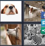4 Pics 1 Word Level 4173 Answers