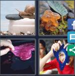 4 Pics 1 Word Level 4216 Answers