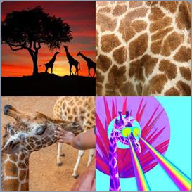 4 Pics 1 Word Level 5704 Answers