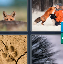 4 Pics 1 Word March 6 2021 Answers Today