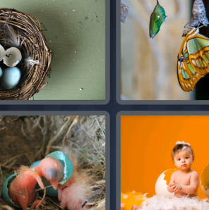 4 Pics 1 Word May 12 2021 Answers Puzzle