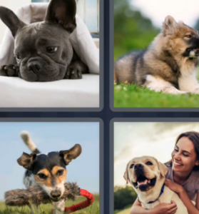 4 Pics 1 Word May 22 2021 Answers Puzzle