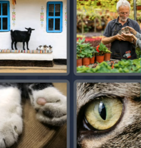 4 Pics 1 Word May 25 2021 Answers Puzzle