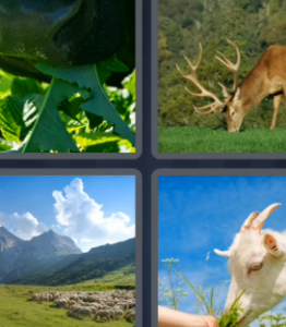 4 Pics 1 Word May 6 2021 Answers Puzzle