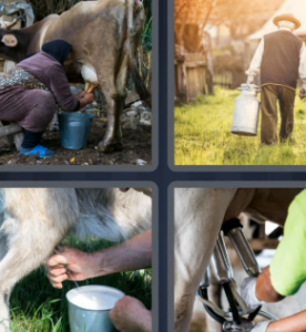 4 Pics 1 Word May 7 2021 Answers Puzzle